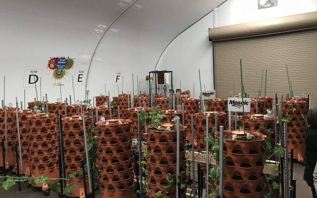 Food Bank Green House - Growing Towers